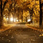 Road in the leaves wallpaper