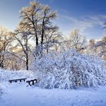 snow forest winter snow forest winter wallpaper