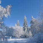 snow winter trees snow winter trees wallpaper