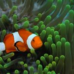 Beautiful tropical fish wallpaper on the seabed
