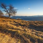 Dry trafa in the mountains wallpaper