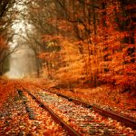 Railway in autumn leaves wallpaper