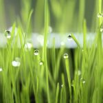 Green leaf water drops wallpaper