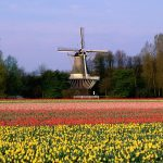Keukenhof Gardens, Lisse, The Netherlands desktop background