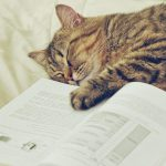 Book sleeping cat cute desktop wallpaper