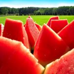 Watermelons on the background of the field hd wallpaper