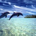 Dolphins over the water wallpaper