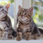 Two kittens wallpaper picture