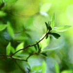 Green plant hd wallpaper