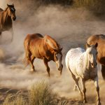 Pentium horse HD wallpaper big picture