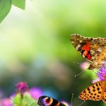 Nice butterfly desktop background picture
