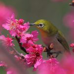 Bird, tree, flower, spring wallpaper