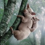 HD sow on tree map wallpaper download