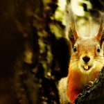 Smiling little squirrel picture wallpaper