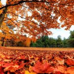 Nice autumn leaves beautiful desktop wallpaper