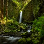 Oregon virgin forest in creek waterfall green landscape desktop wallpaper