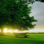 Beautiful bench green landscape desktop wallpaper