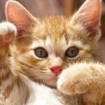 Sell ​​cute cute kittens picture wallpaper big picture