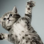 People will also play badminton. Kitten wallpaper