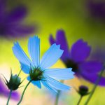 Beautiful small fresh flowers wallpaper desktop