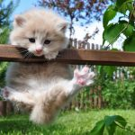 People almost climbed up, kitten cat cute widescreen wallpaper