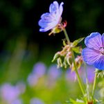 Wild HD beautiful flowers desktop wallpaper