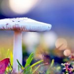 Beautiful mushroom beautiful desktop wallpaper
