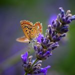 Beautiful butterfly on the flower HD desktop wallpaper