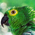 Green parrot desktop background