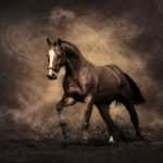 2014 HD Horse Wallpaper Picture