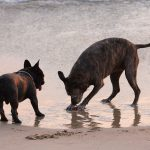 water, dogs, steam desktop background