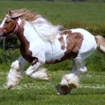 Wild horse running HD wallpaper