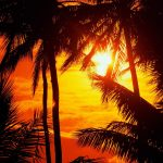 Beautiful sunset at the palm trees