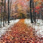 Autumn covered with fallen leaves, beautiful desktop wallpaper