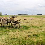 Old carriage in the field desktop background