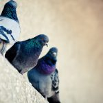 Pigeons on the windowsill small fresh desktop wallpaper