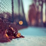Leaves at the mesh fence