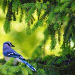 Beautiful Birds HD Wallpaper on Spring Branch
