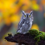 Owl desktop wallpaper HD download