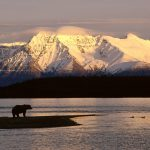 Alaskan Brown Bear Silhouetted Against Mount Katolinat, Alaska