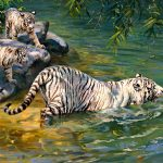 Rivers, albinos, painting, Donald Grant, tigers