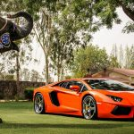 Lamborghini, Aventador, LP700-4, orange, elephant, landscape wallpaper