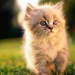 Cat in the grass wallpaper