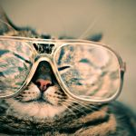 funny, glasses, cat