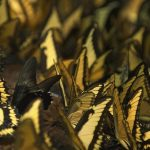 Insects, butterflies, wallpapers, miscellaneous