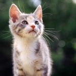 Cat looking up hd wallpaper
