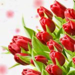 red tulips desktop wallpaper