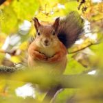Forest, little squirrel, curious eyes, branches, cute animals wallpaper