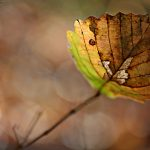 Leaves, autumn, photo, autumn wallpaper, macro, sheet