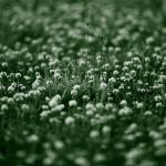 Green grass small flower desktop background